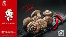 如何区分鸡腿菇和杏鲍菇?南阳易佰福食品教您这几招!
